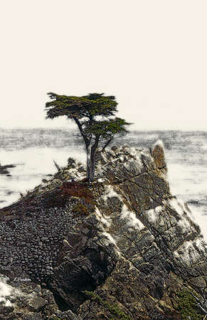 Lone Cypress, California Coast