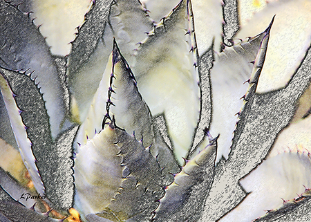 Agave of the southwest